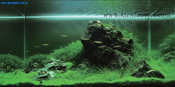 Mẫu bể cá cho nhà đẹp - 03