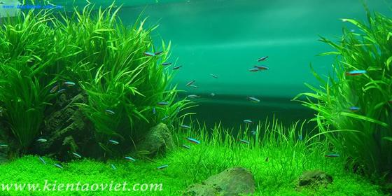 Mẫu bể cá cho nhà đẹp - 09